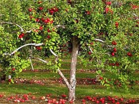 как защитить яблони от грызунов